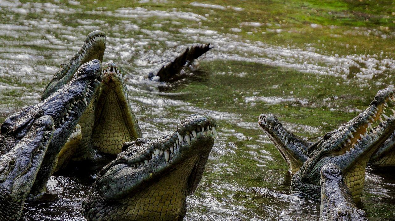 bag of crocodiles