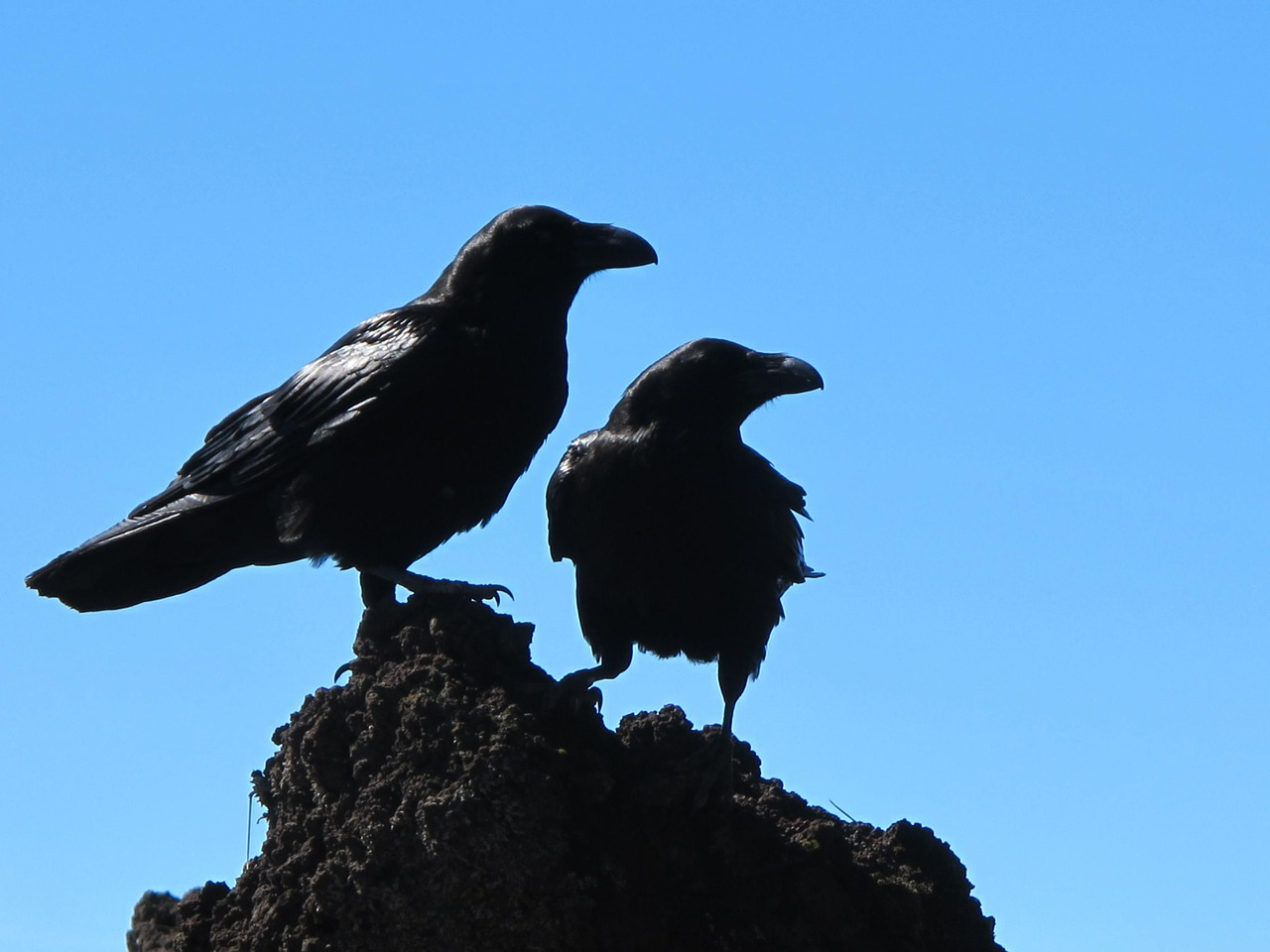 stone of crows