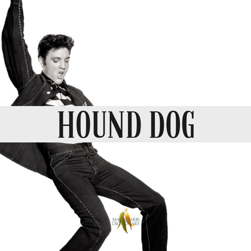 Macquarie Dictionary-hound dog-a mean, despicable man.