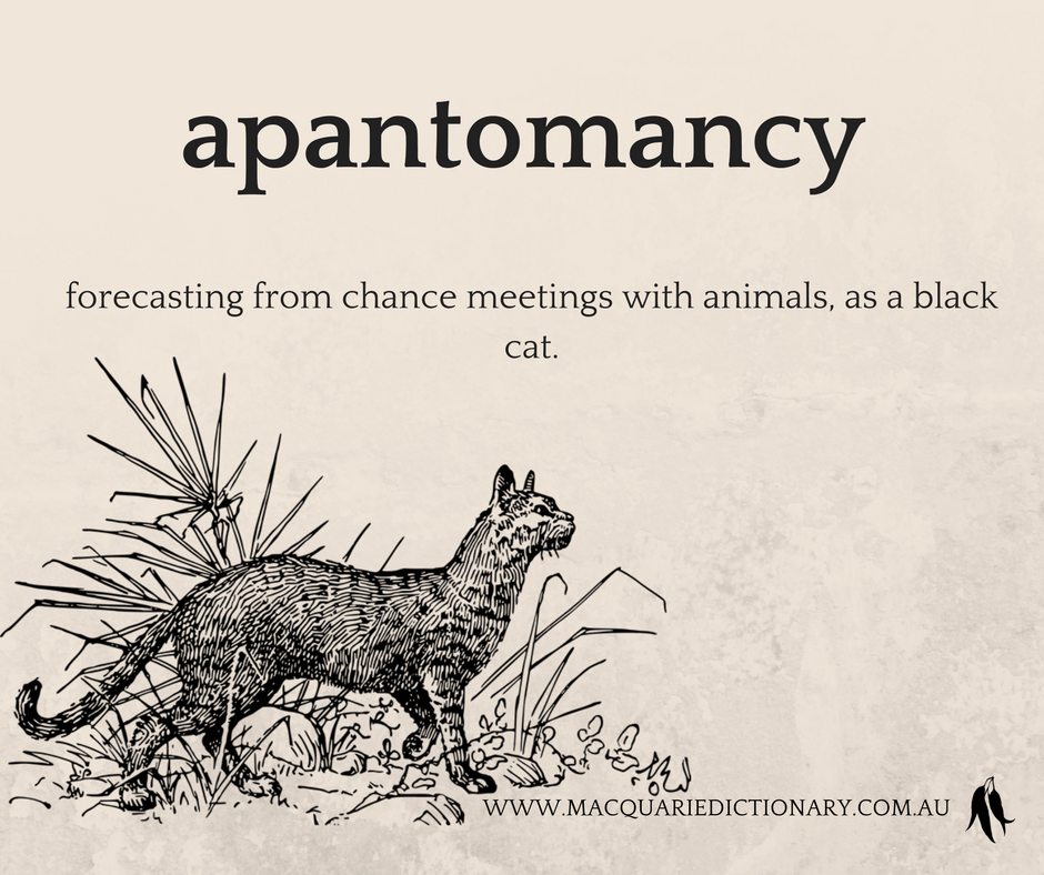 apantomancy	forecasting from chance meetings with animals, as a black cat.