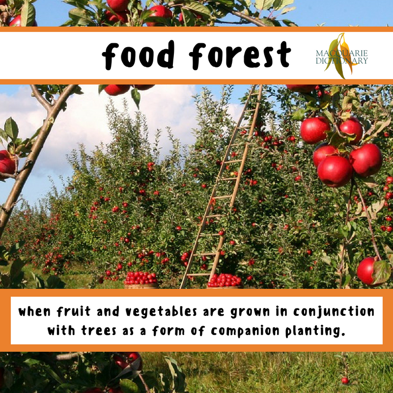 Macquarie Dictionary-food forest-when fruit and vegetables are grown in conjunction with trees as a form of companion planting.