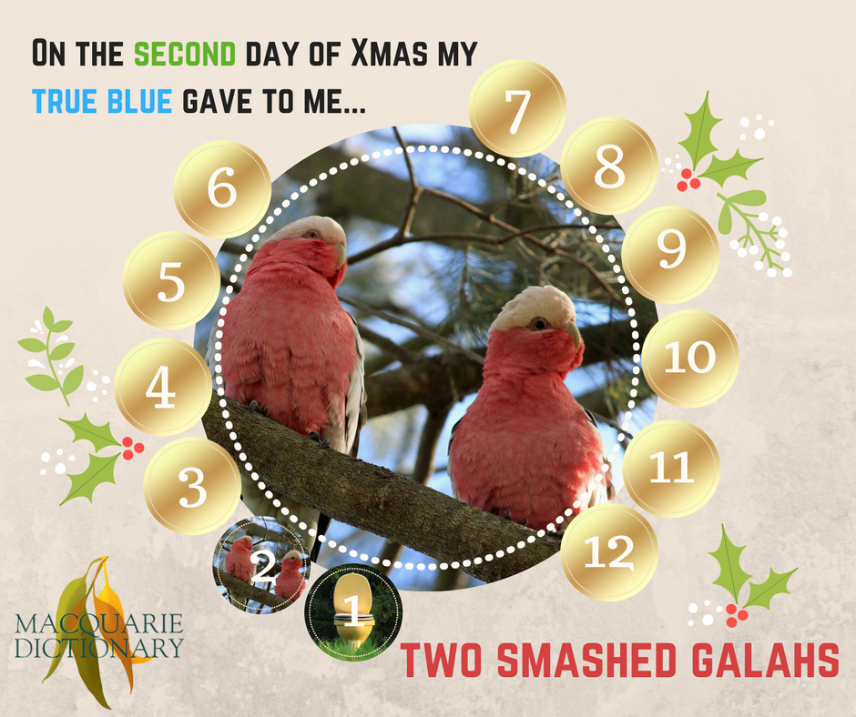 12 days of Aussie Christmas - two smashed galahs