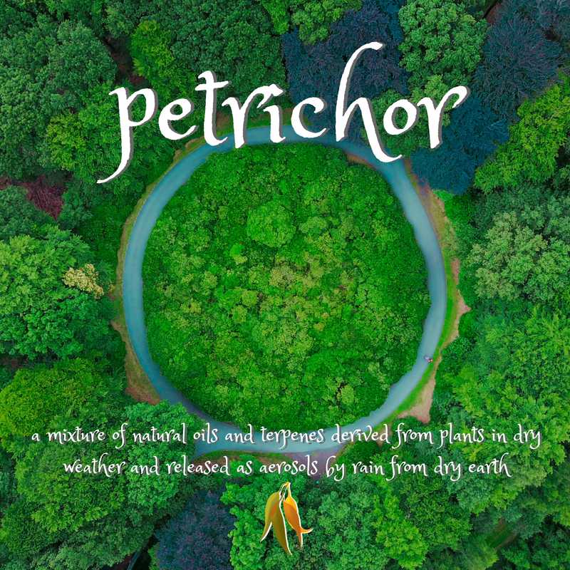 beautiful words from Macquarie Dictionary - petrichor - a mixture of natural oils and terpenes derived from plants in dry weather and released as aerosols by rain from dry earth