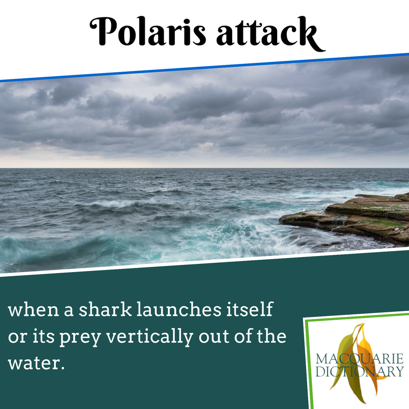 Macquarie Dictionary new words - Polaris attack - when a shark launches itself or its prey vertically out of the water.