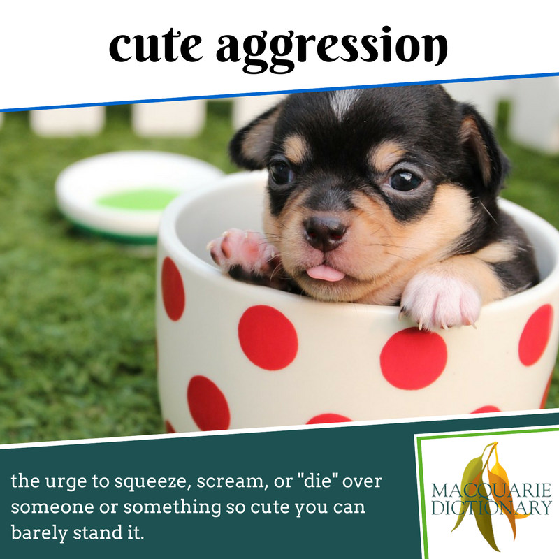 "Macquarie Dictionary new words - cute aggression - the urge to squeeze, scream, or ""die"" over someone or something so cute you can barely stand it"