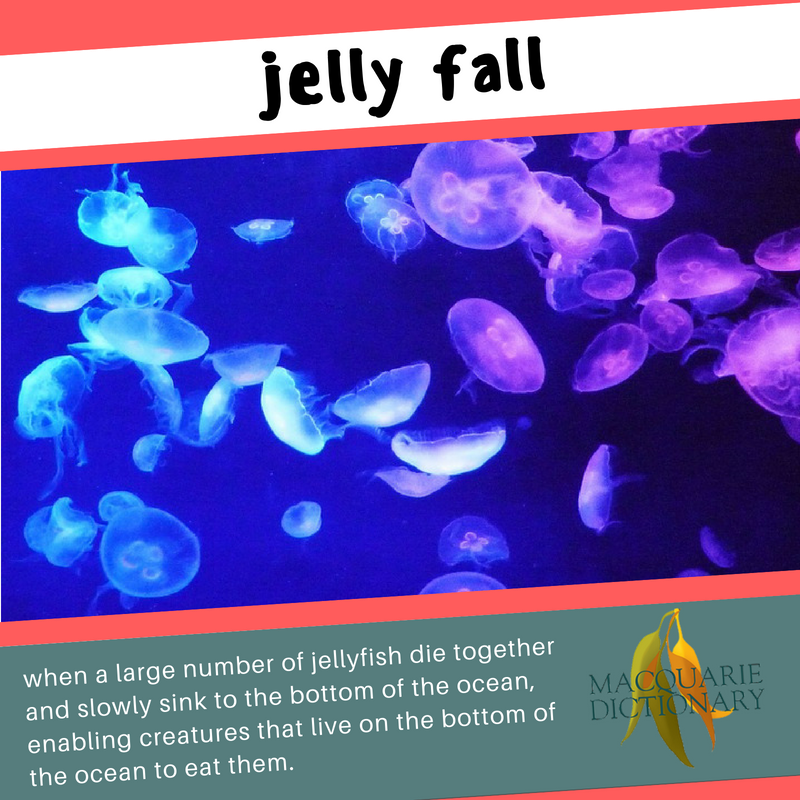 Macquarie Dictionary new words jelly fall when a large bloom of jellyfish dies and sinks to the bottom of the ocean, providing food for detritivores