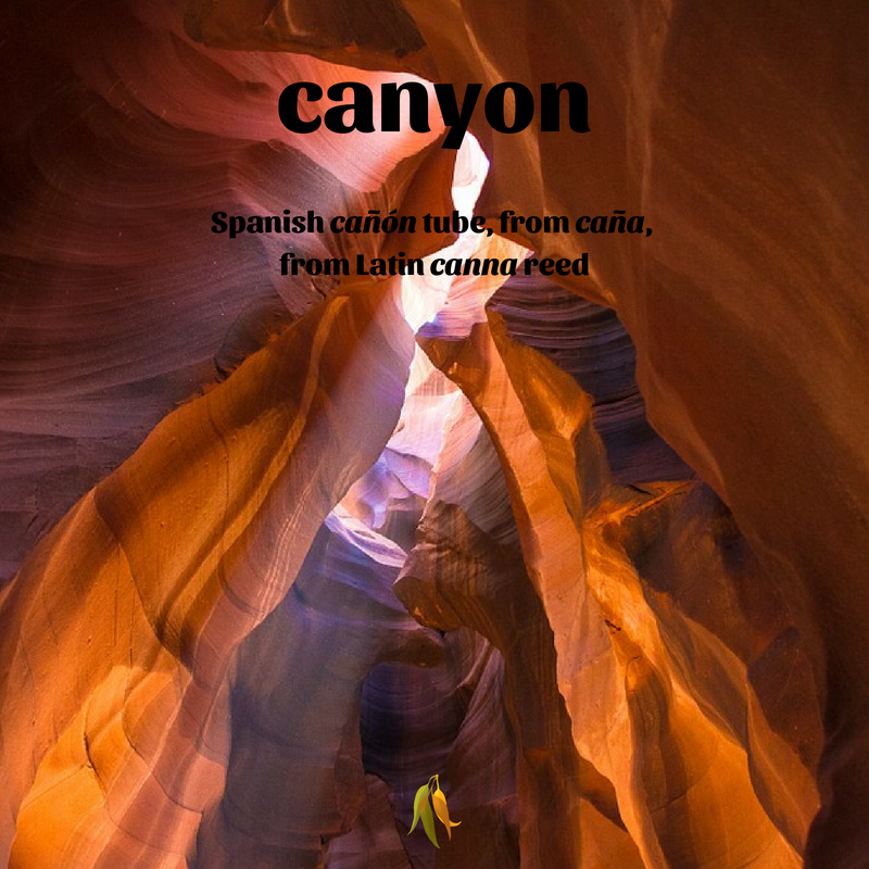 Macquarie Dictionary well travelled words canyon - Spanish cañón tube, from caña, from Latin canna reed