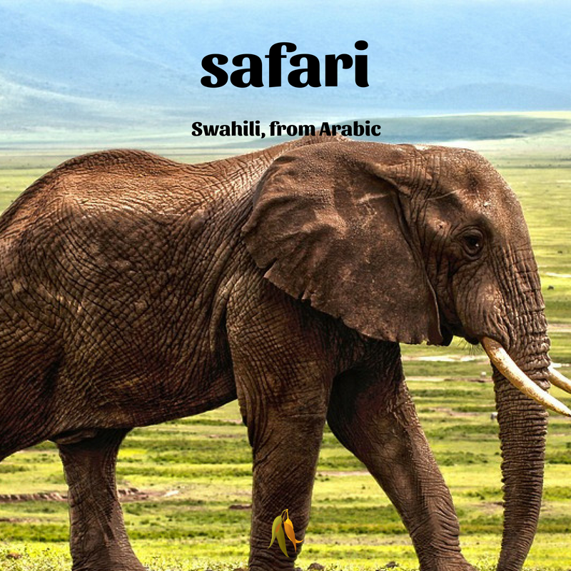 Macquarie Dictionary well travelled words safari - Swahili, from Arabic