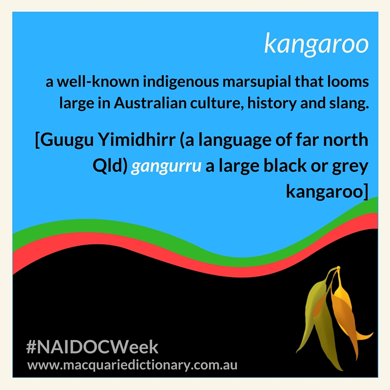 kangaroo a well-known indigenous marsupial that looms large in Australian culture, history and slang. [Guugu Yimidhirr (a language of far north Qld) gangurru a large black or grey kangaroo]