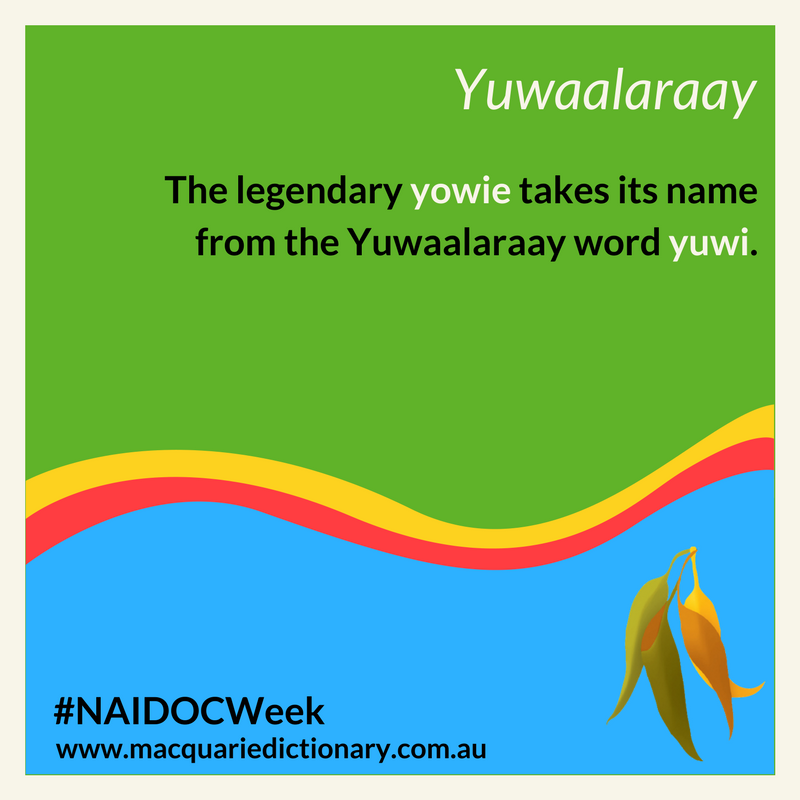 Macquarie Dictionary NAIDOC Week - The legendary yowie takes its name from the Yuwaalaraay word yuwi.