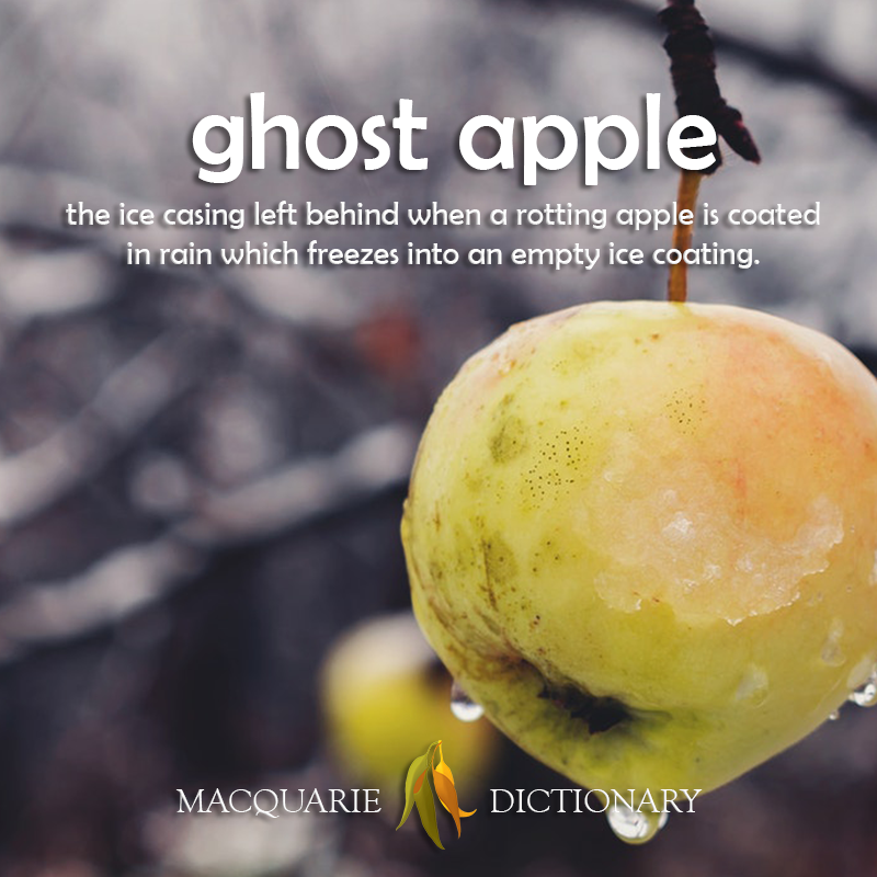 Image of definition of ghost apple: the ice casing left behind when a rotting apple is coated in rain which freezes into an empty ice coating.