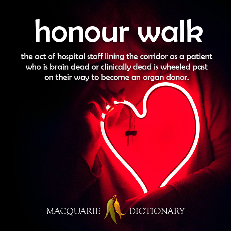 Image of definition of honour walk: the act of hospital staff lining the corridor as a patient who is brain dead or clinically dead is wheeled past on their way to become an organ donor.