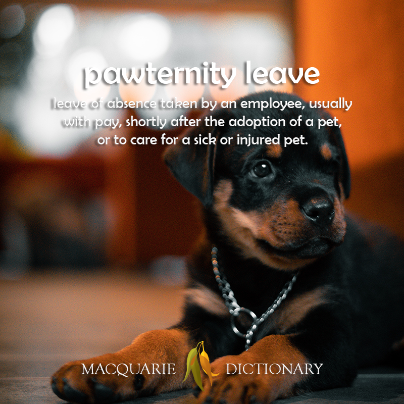 pawternity leave - leave to take care of a pet