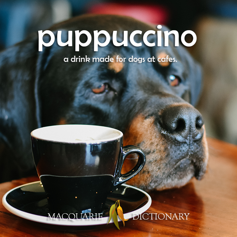 new words - puppucccino	a drink made for dogs at cafes [puppy + cappacino)