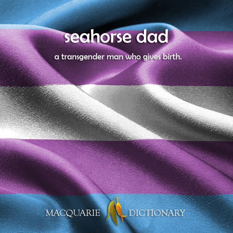 seahorse dad -a transgender man who gives birth