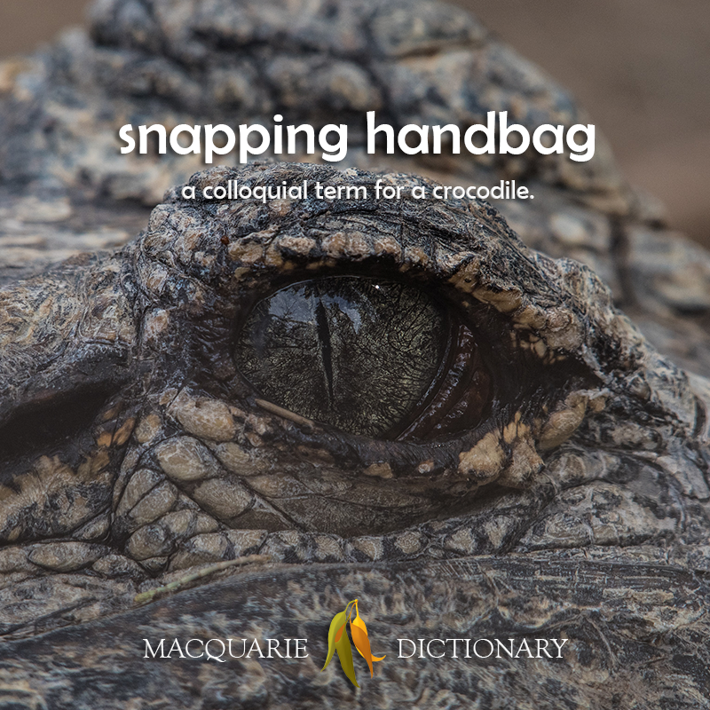 snapping handbag - a colloquial term for a crocodile
