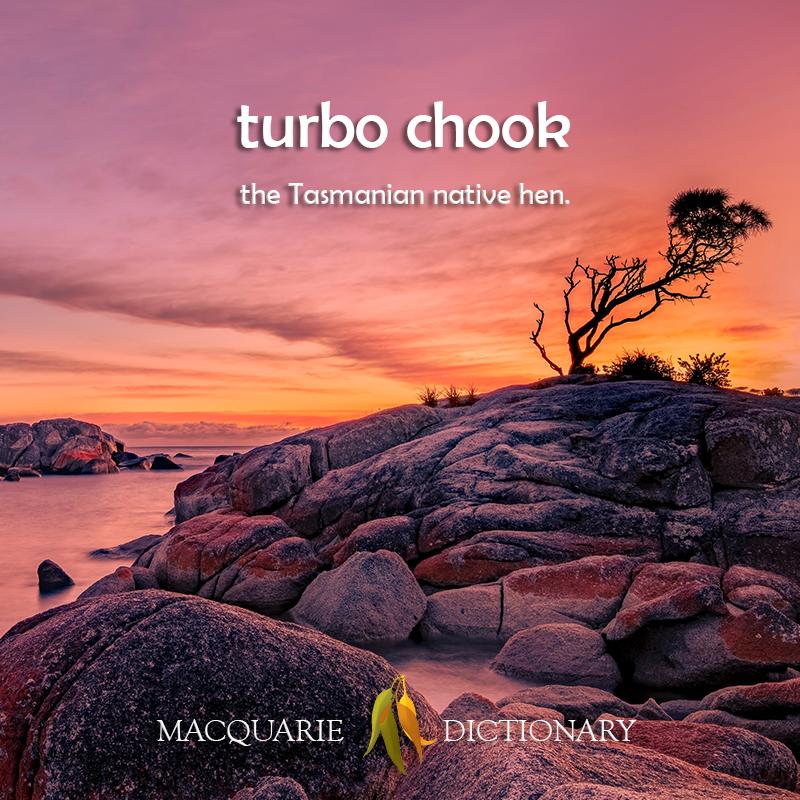 turbo chook - the Tasmanian native hen