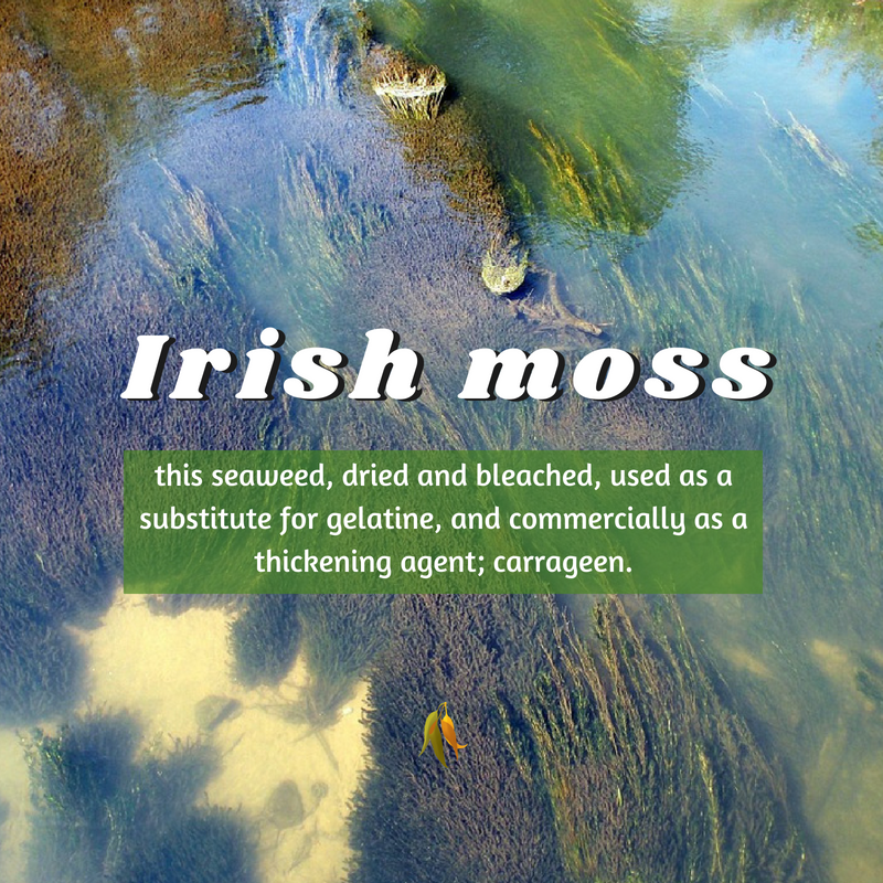 Macquarie Dictionary-Irish Moss-this seaweed, dried and bleached, used as a substitute for gelatine, and commercially as a thickening agent; carrageen.