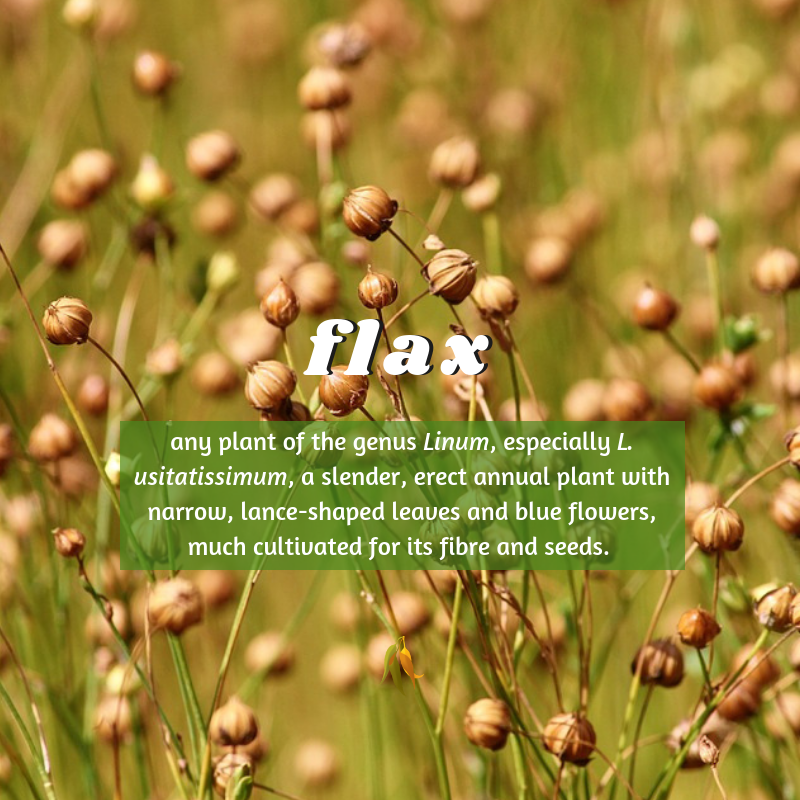 Macquarie Dictionary-flax-any plant of the genus Linum, especially L. usitatissimum, a slender, erect annual plant with narrow, lance-shaped leaves and blue flowers, much cultivated for its fibre and seeds.