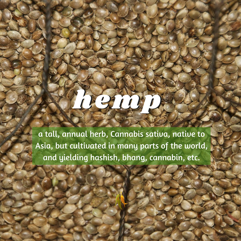 Macquarie Dictionary-hemp-a tall, annual herb, Cannabis sativa, native to Asia, but cultivated in many parts of the world, and yielding hashish, bhang, cannabin, etc.