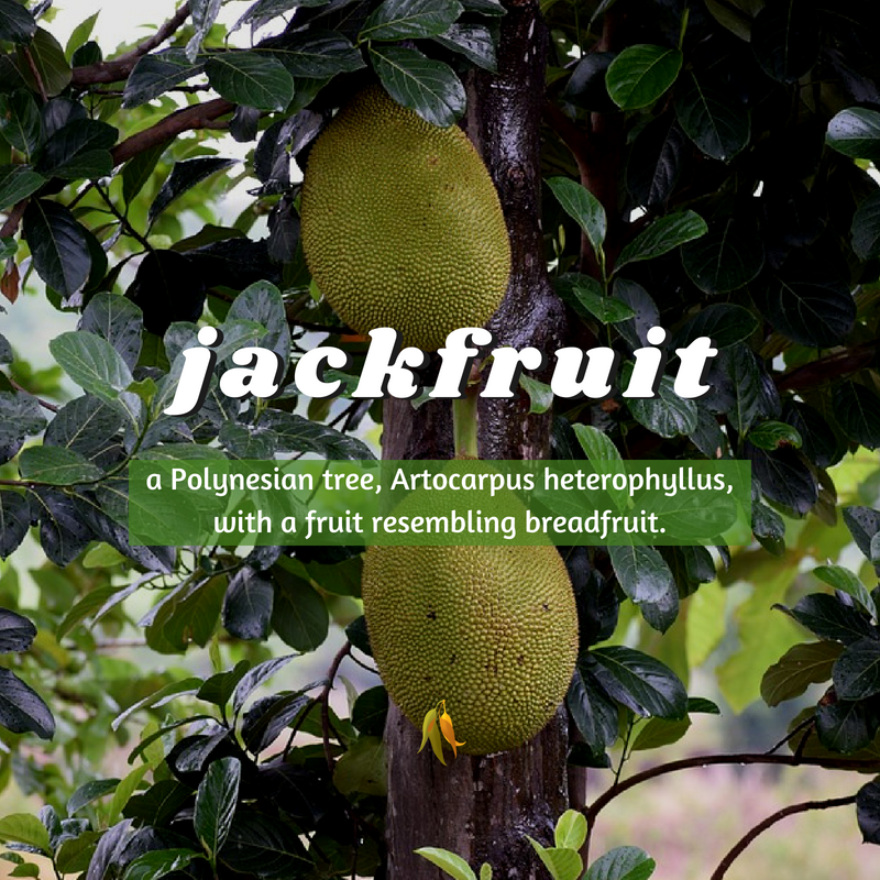Macquarie Dictionary-jackfruit-a Polynesian tree, Artocarpus heterophyllus, with a fruit resembling breadfruit.