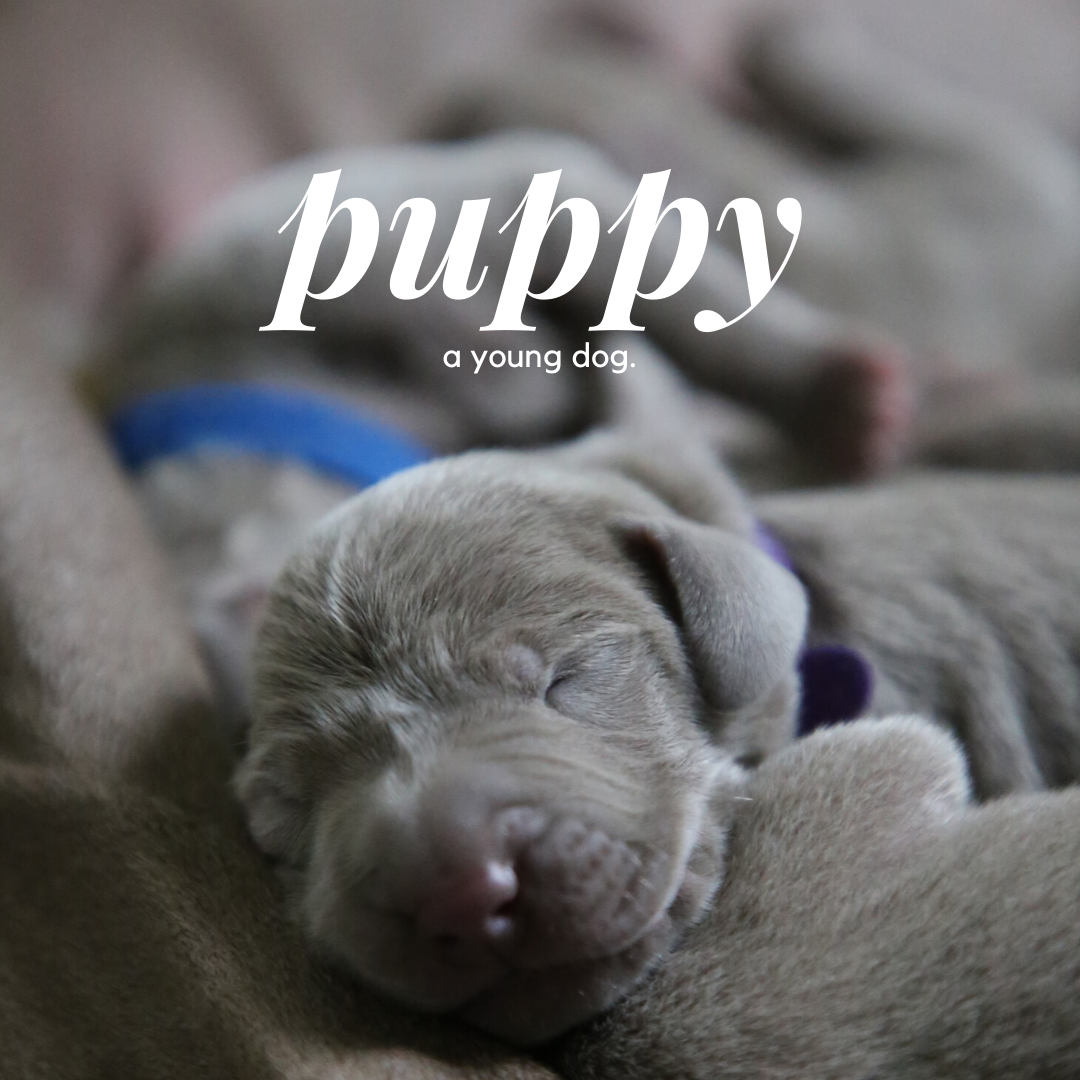 Image of a puppy