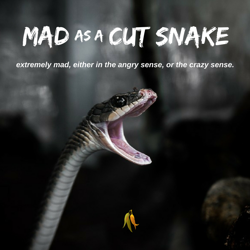 Macquarie Dictionary-Mad as a cut snake-Formerly this phrase used to be just mad as a snake. The phrase like a cut snake is used describe someone or something that is in a frenzy of activity