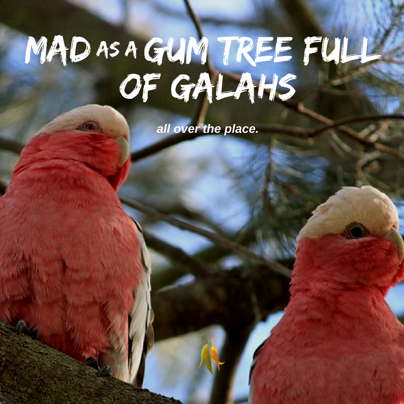 Macquarie Dictionary-Mad as a gumtree full of galahs-If you call someone a flaming galah you are calling them a fool