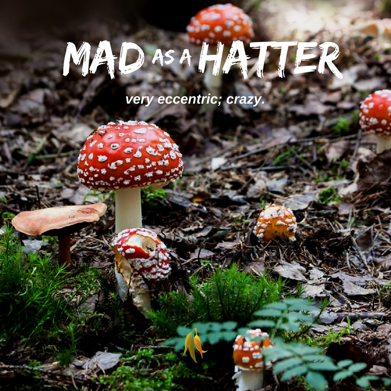 Macquarie Dictionary-Mad as a hatter-This phrase comes from the time when hat-makers worked with mercury, mercury poisoning causing brain disorders