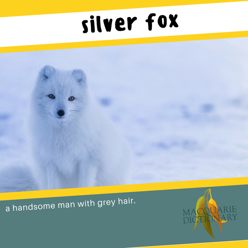 Macquarie Dictionary new words silver fox a handsome man with grey hair